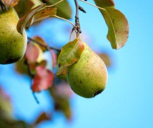 Fruits peu acidifiants contre l'incontinence urinaire